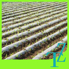 mulch film reduce the cost and increase the harvest