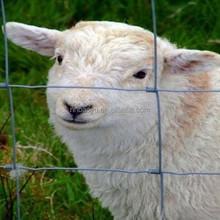animal enclosure fence/pet fence/cattle fence