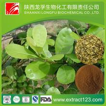 Plant extract instant black tea extract powder