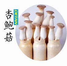 Fresh raw Pleurotus eryngii mushroom Wholesale