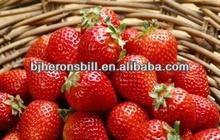 concentrado de jugo de fresa sin aditivo alimentario