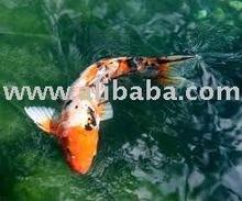 Multi Fish