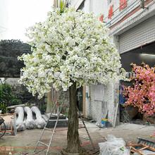 la flor de cerezo del árbol