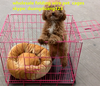 wholesale folding pet cages/ wire cages/ metal wire dog carrier