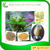 /product-gs/lowering-blood-pressure-tribulus-terrestris-saponins-with-best-price-60283212479.html