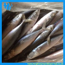 Frozen pacific mackerel with competitive price