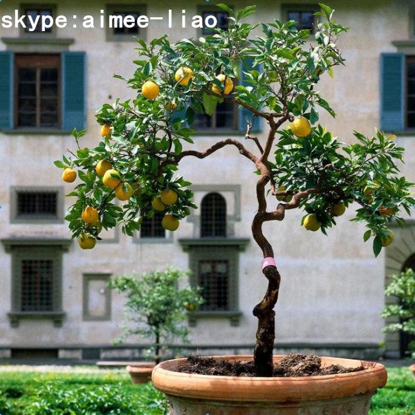 Q082201 different types of plants and trees cheap for Buy lemon tree