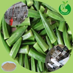 GMP factory price supply okra extract/Dried okra powder