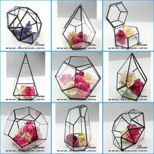 globle glass fish bowl geometrical new shape glass ball terrarium