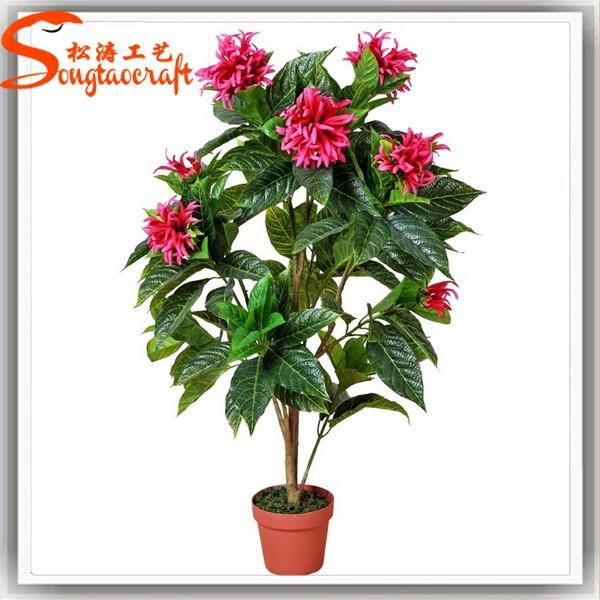 Plantes d 39 int rieur fleurs et plantes fleur plante noms de for Plante western