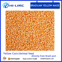 Dried yellow corn Brazil yellow maize for poultry feed