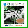 Manufacturer supply Pure Natural Women menopause Black Cohosh extract 2.5%