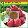 Factory supply Raspberry powder