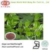 Gymnema P.E Gymnemic Acids 25%/Gymnema sylvestre Schult Extract