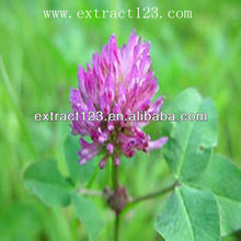 Red clover extract 2.5%-40% Isoflavone CAS NO.:574-12-9