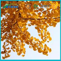 ISO& kosher factory supply ginkgo biloba extract powder Ginkgo Flavones Glycoside 24.0%