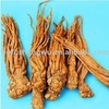 Herb and plant extract Angelica extract (Dong Quai) Ligustilides 1%
