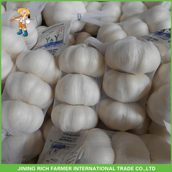 Kosher Halal Gap Pure White Garlic In New Season