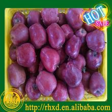 mature huaniu appe gansu red huaniu apple high quality huaniu apple
