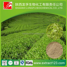 Manufacturer Sales Organic Green Tea Extract