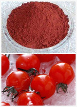 Manufacturer Supply GMP Certificate 100% Pure Natural Tomato Extract in Herbal Extract