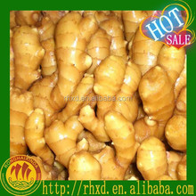 buy fresh young ginger(2013 crop lowest price)