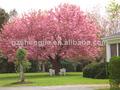 flores de plástico de la flor de cerezo de china para la fabricación de venta al por mayor