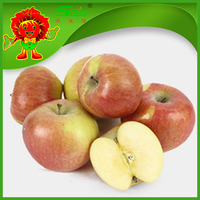 China fruit top red apple wholesale