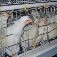 Chicken farm machine Manufacturer layer egg chicken cage/poultry farm house design