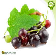 Black currant extract/blacks currant seed oil