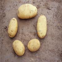 2014 organic fresh potato/potato plant base/potato processing factory