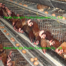 2015 hot sale automatic A type poultry cage chicken layer battery cage for farm