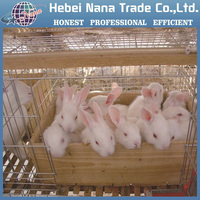 Hot sale China industrial metal rabbit cages(manufacturer)