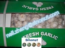 Different Mesh Bag Carton packing Fresh Garlic