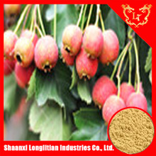 High Quality Natural hawthorn berry extract