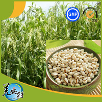 Famous region drug Dried Raw Material Yiren,Semen Coicis