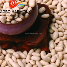 White Kidney Beans Baishake Type