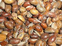 Madhuca longifolia seeds