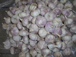 2015 garlic good price in Jinxiang