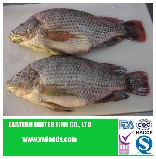 Dried frozen tilapia fish fillets buy frozen dried for Best frozen fish fillets