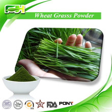 Health Drink Wheat Grass Powder Supplier
