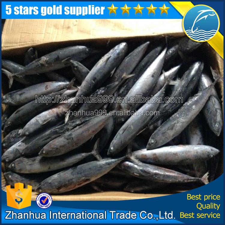 Bonito fish with prices bonito tuna for canned precooked for Tuna fish price