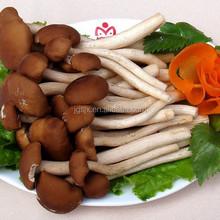 Mushroom Trade China wholesale Dried Mashroom Agrocybe, Jew's ear mushroom for sale