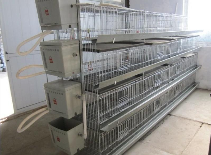 large animal cage for chickens