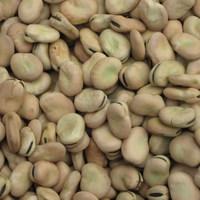 dried broad beans bulk dry fava beans