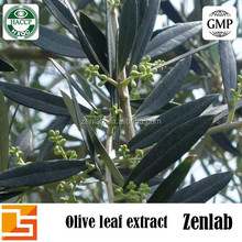 High quality pure natural dried olive leaf extract olive powder