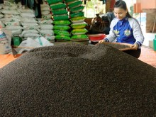 Vietnam Black Pepper