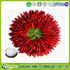 Capsaicin 98% hplc Pharmaceutical Grade,Organic Capsaicin Extract