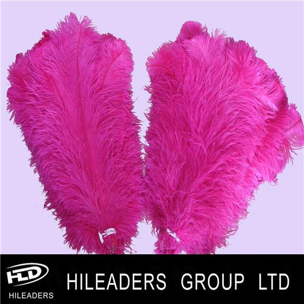 ostrich feather0.jpg