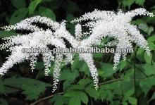 Actaea racemosa extract/ Black Cohosh P.E